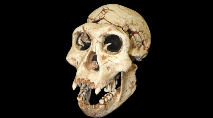 The earliest known hominid interbreeding occurred 700,000 years ago